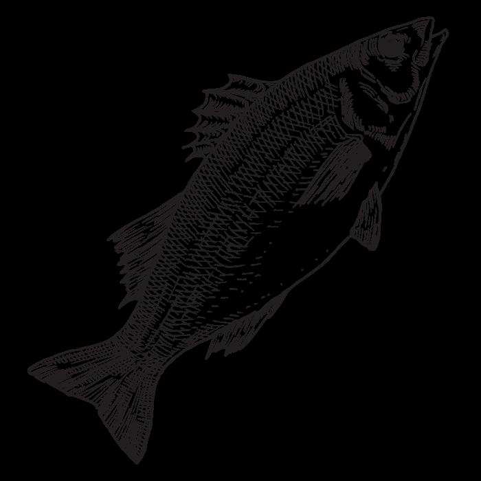 Paket MarFish Velikog brancina